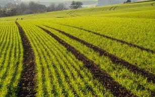 Reti per Recinzione terreni agricoli