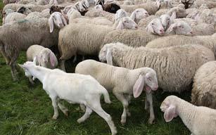 Reti per Recinzione per allevamento animali